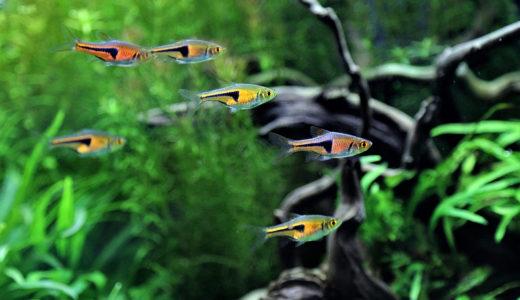 映画「冷たい熱帯魚」のロケ地3ヶ所を紹介!熱帯魚マニア必見の撮影地とは
